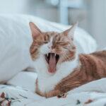 šta-nas-mačke-mogu-naučiti-o-kreiranju-sadržaja-mačka-na-krevetu