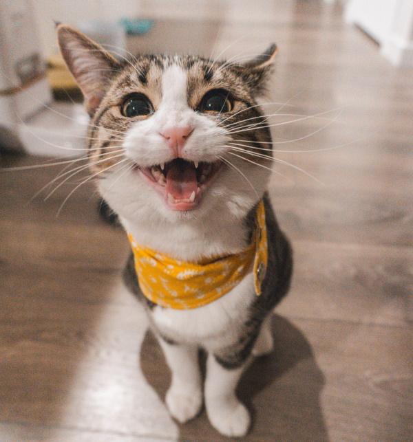 šta nas mačke mogu naučiti o kreiranju sadržaja?